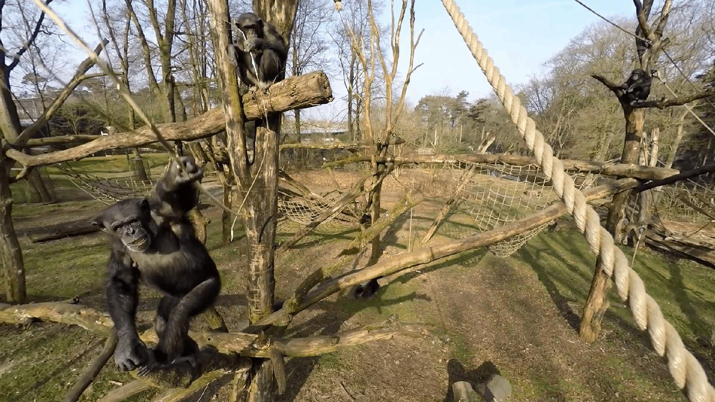 chimapnsee-drone-burgers-zoo-aap-trotse-vaders