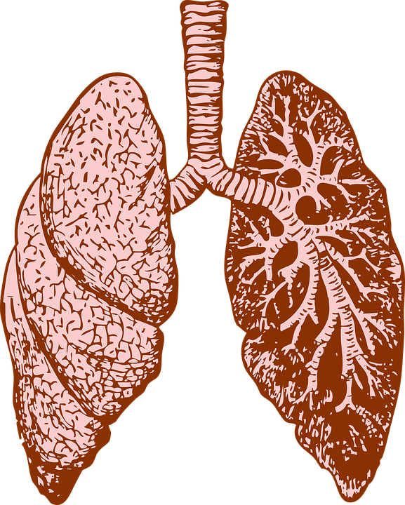 lungs-37824_960_720